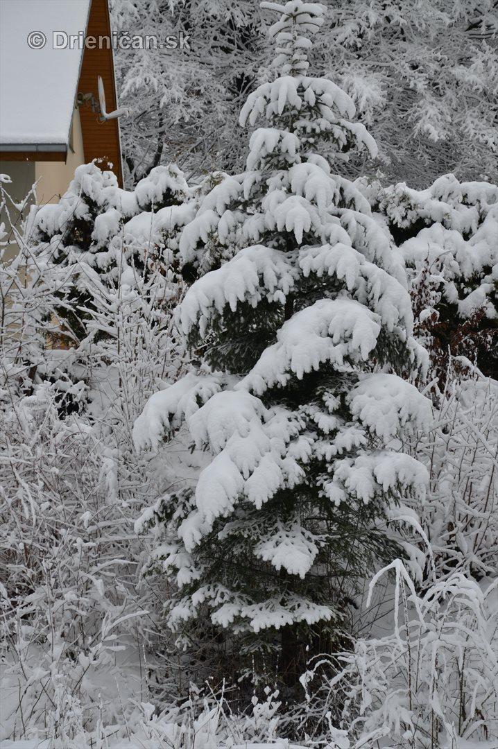 Drienica Lysa pod snehom_09