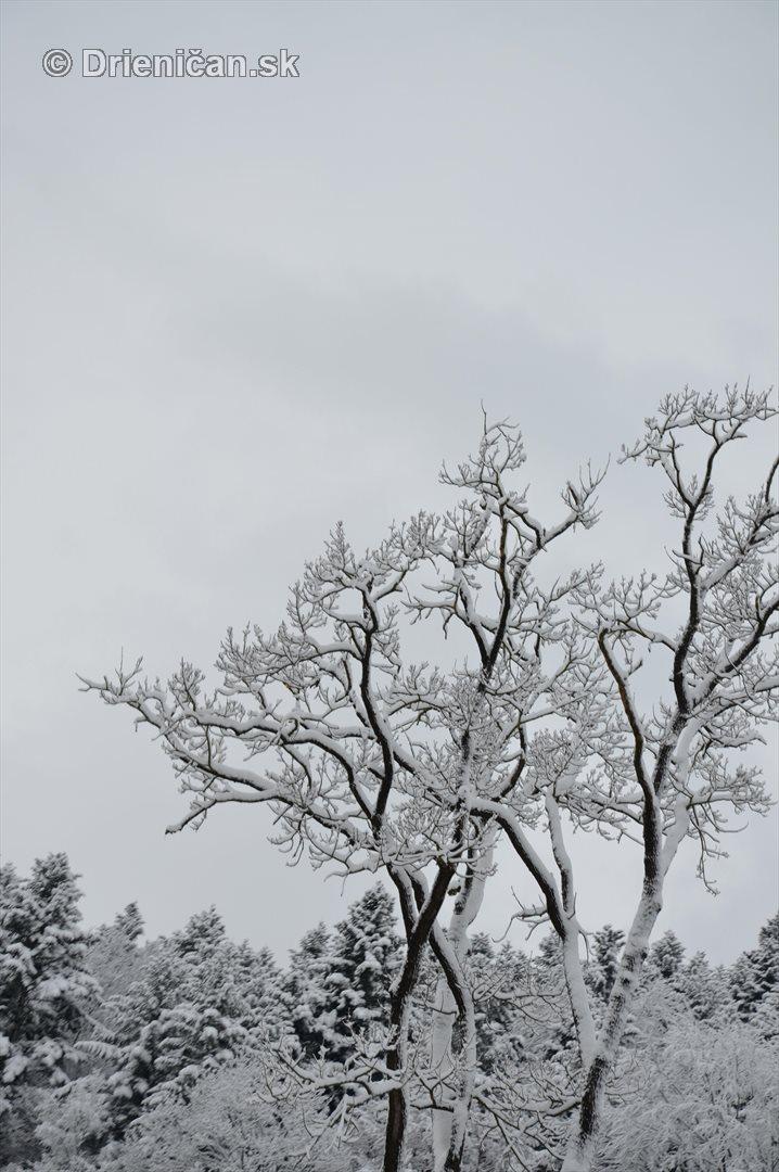 Drienica Lysa pod snehom_27