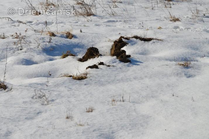 Februarovy sneh_21