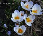 Obrazy jari
