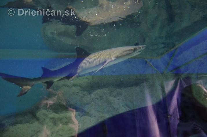 Zive zraloky v Sabinove_02