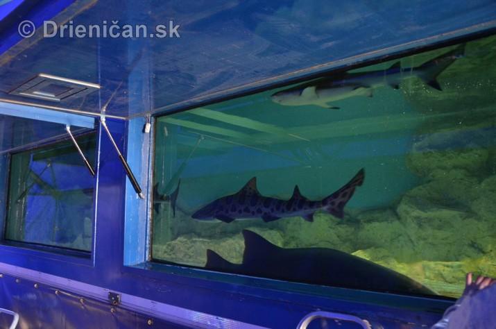 Zive zraloky v Sabinove_06