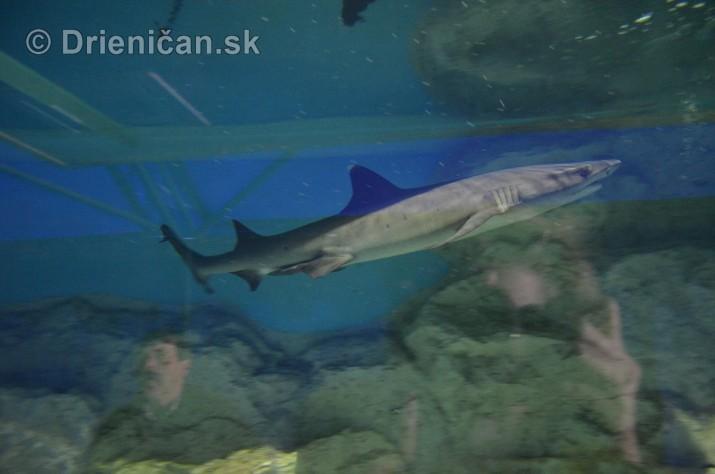 Zive zraloky v Sabinove_08
