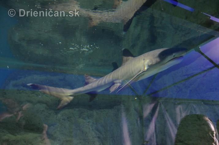Zive zraloky v Sabinove_09