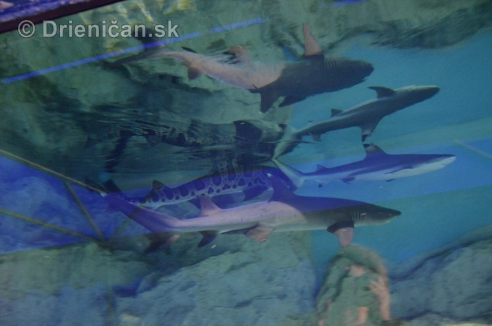 Zive zraloky v Sabinove_12