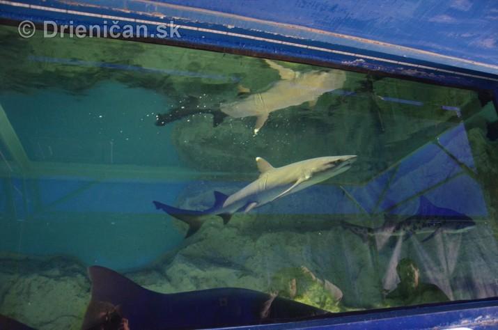 Zive zraloky v Sabinove_13