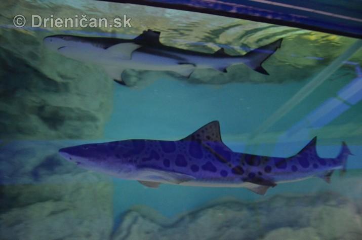 Zive zraloky v Sabinove_14