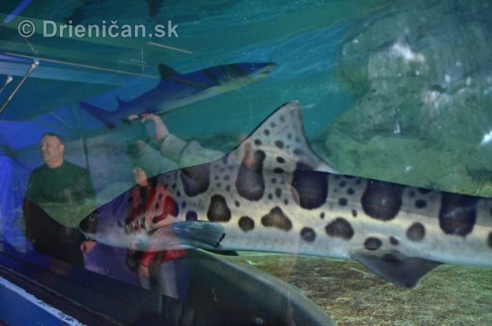 Zive zraloky v Sabinove_15