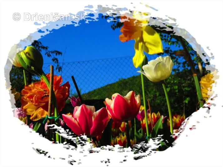 Farebný svet tulipánov