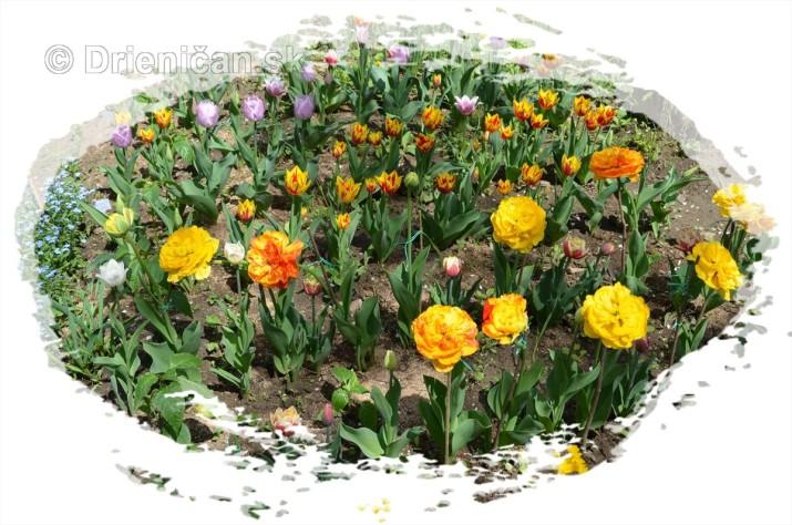 Farebny svet tulipanov_14