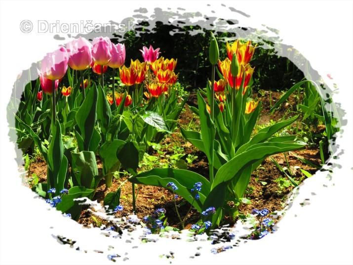 Farebny svet tulipanov_19