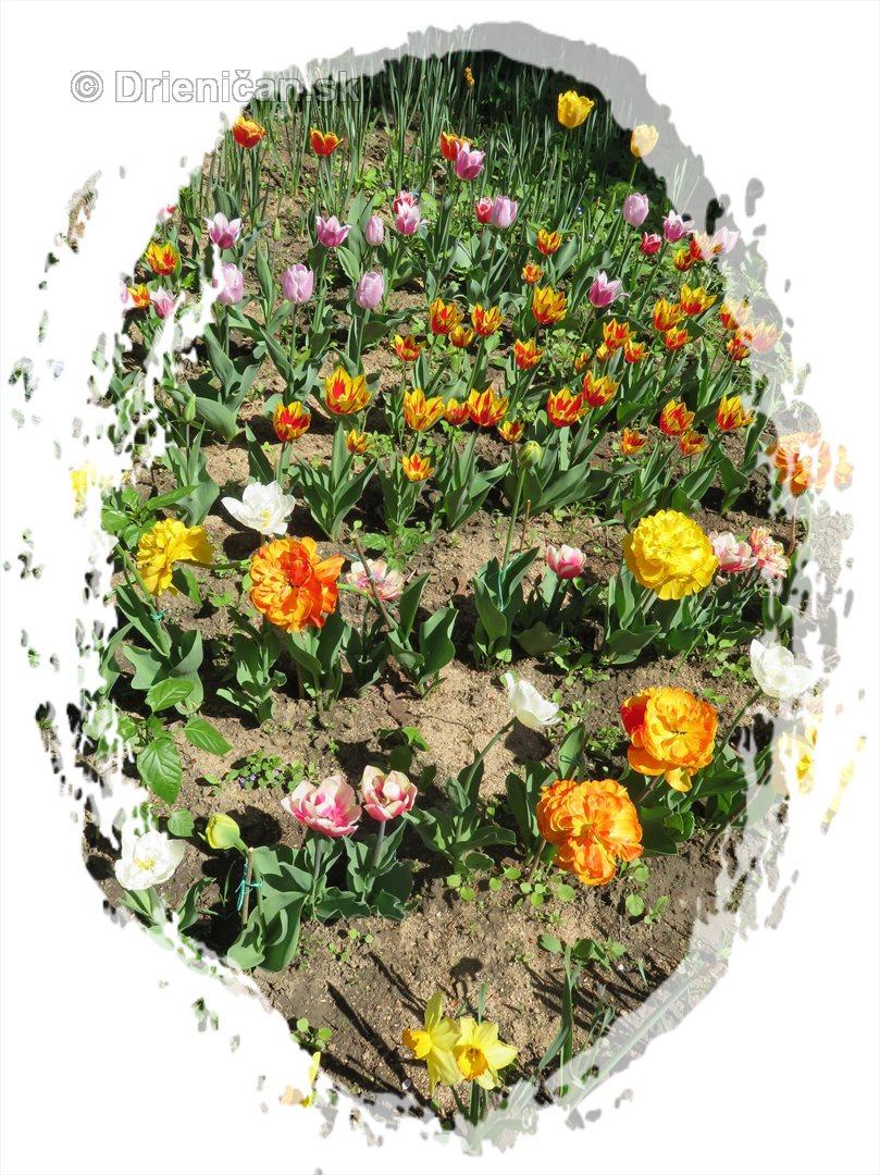 Farebny svet tulipanov_29