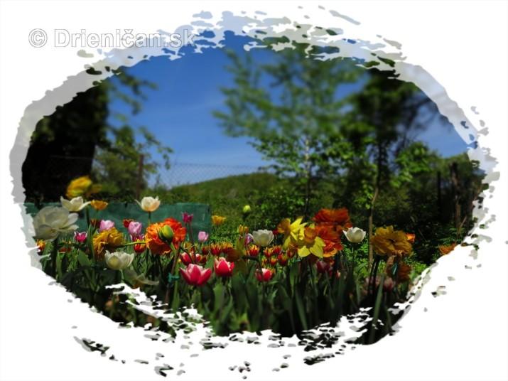 Farebny svet tulipanov_32