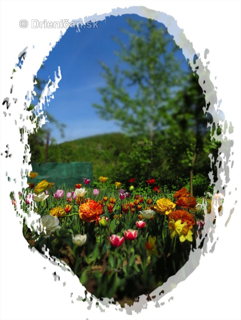 Farebny svet tulipanov_33