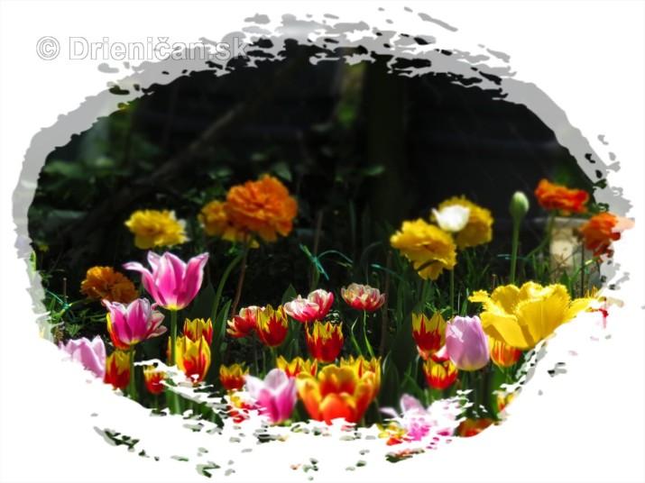 Farebny svet tulipanov_36