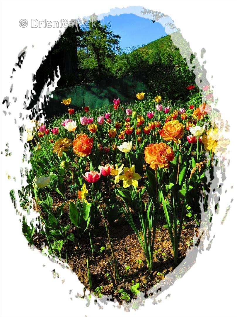 Farebny svet tulipanov_39