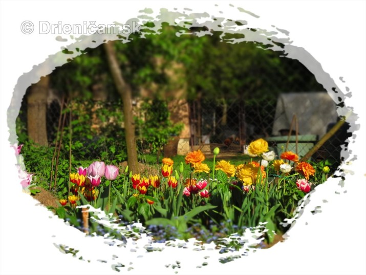 Farebny svet tulipanov_42