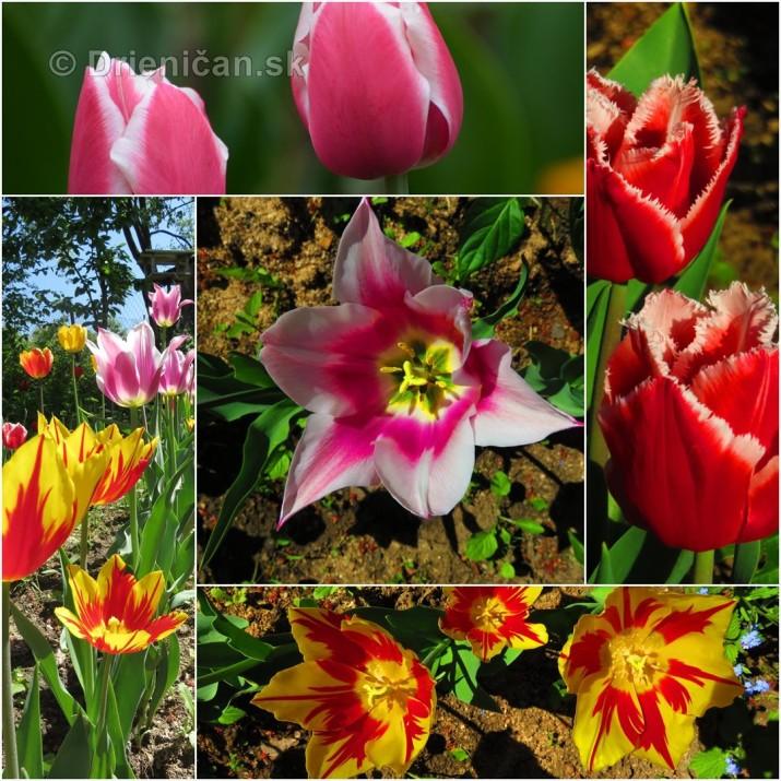 Farebny svet tulipanov_51