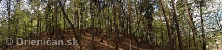 Ked Drienica v maji zakvitne panorama_03
