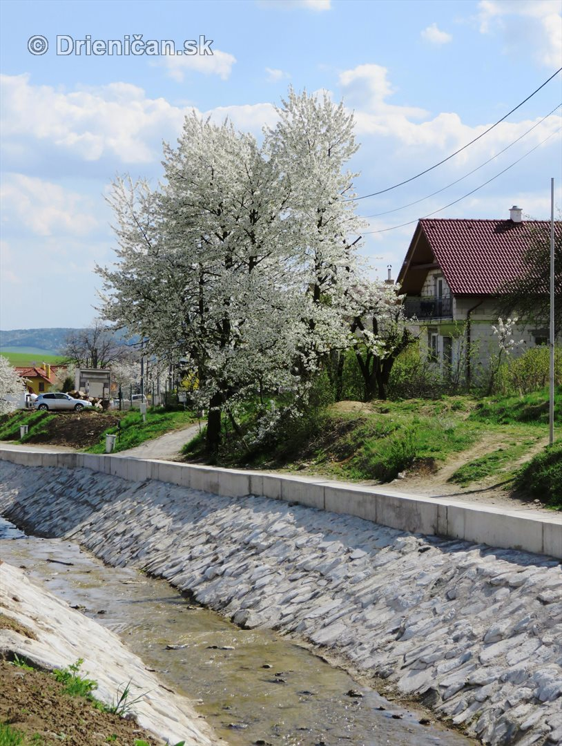 Ked Drienica v maji zakvitne_68