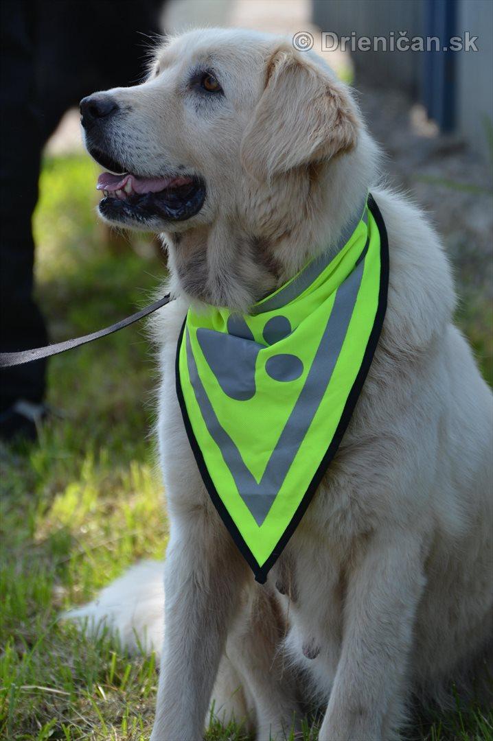 Vycvik psov Sabinov_09