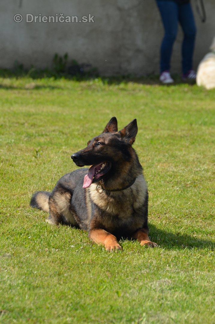 Vycvik psov Sabinov_21