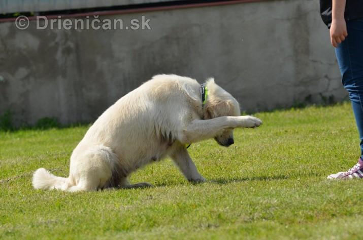 Vycvik psov Sabinov_23
