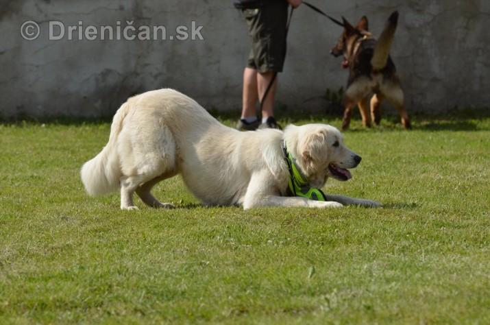 Vycvik psov Sabinov_24