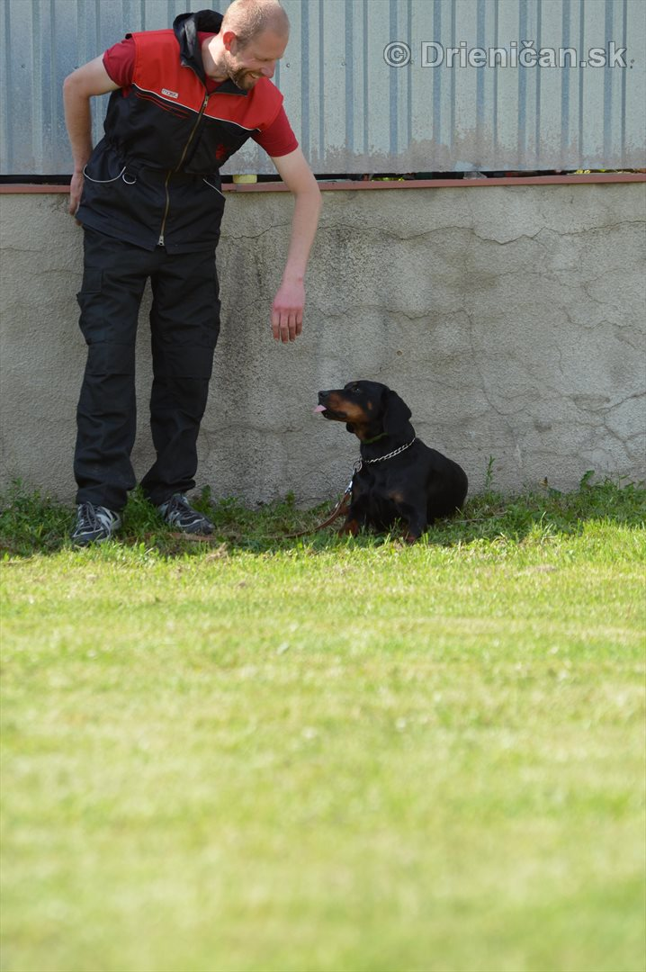 Vycvik psov Sabinov_28