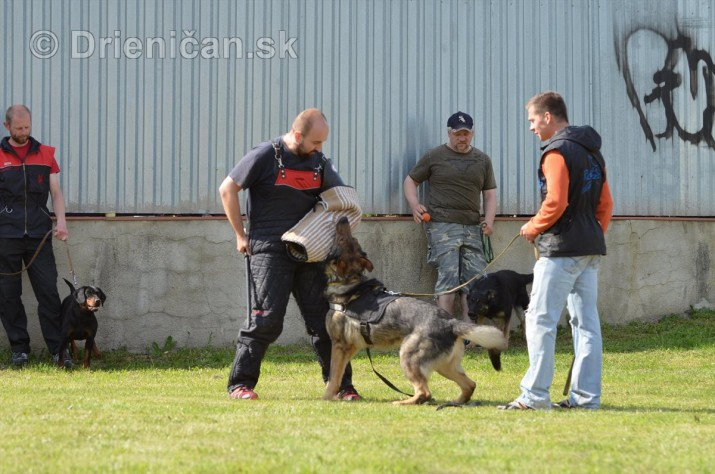 Vycvik psov Sabinov_35