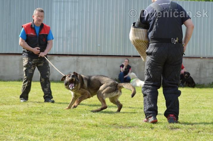 Vycvik psov Sabinov_42