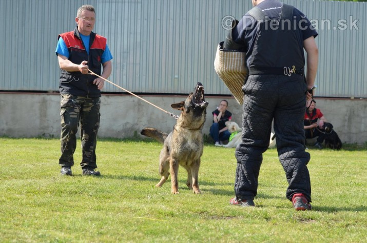 Vycvik psov Sabinov_43