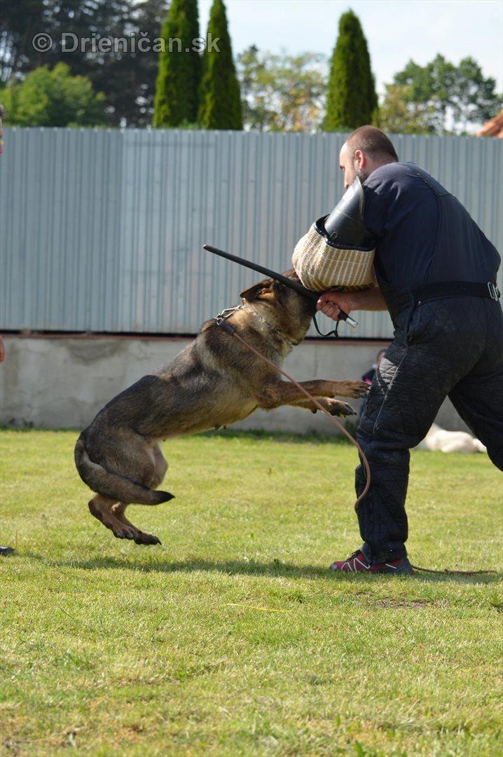 Vycvik psov Sabinov_44