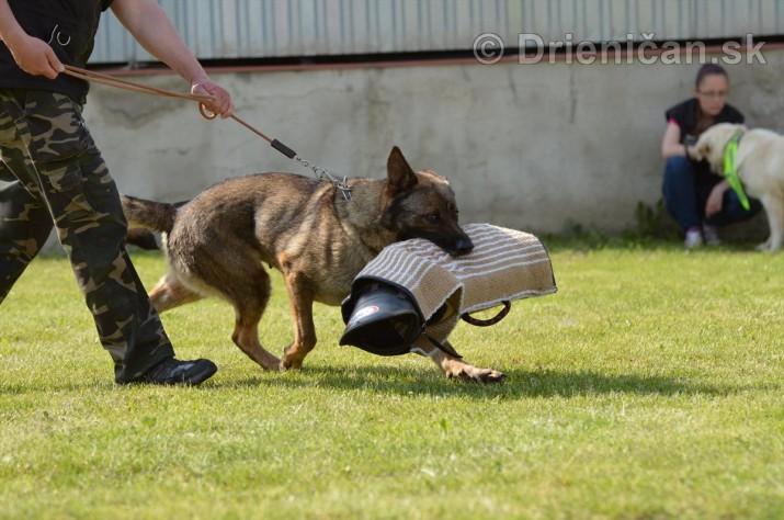 Vycvik psov Sabinov_45