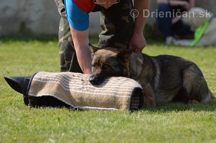 Vycvik psov Sabinov_46