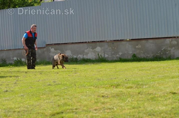 Vycvik psov Sabinov_48