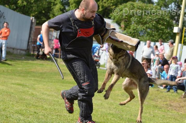 Vycvik psov Sabinov_49