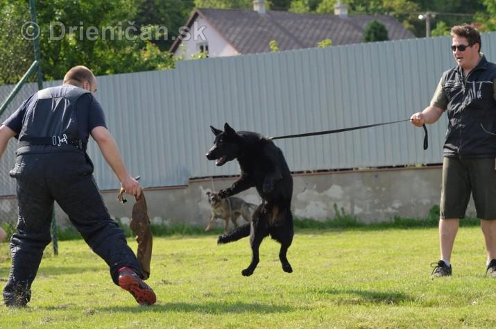 Vycvik psov Sabinov_53