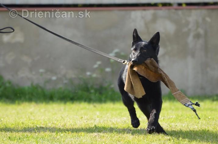 Vycvik psov Sabinov_54