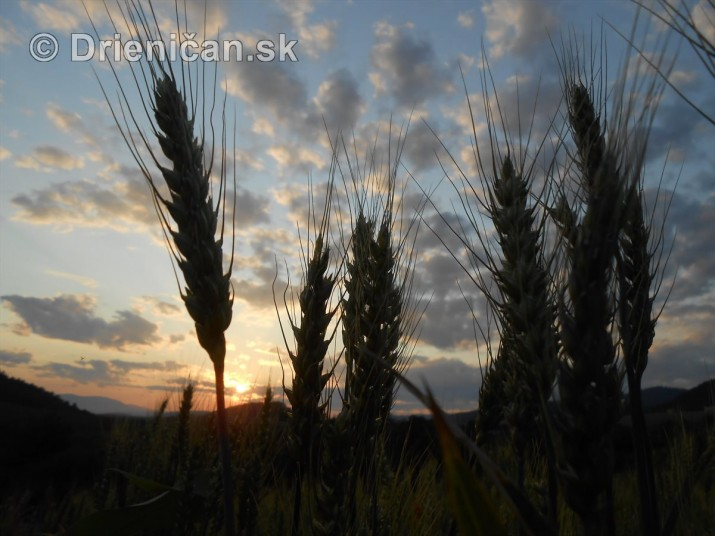 Este stale zelene rzno_07