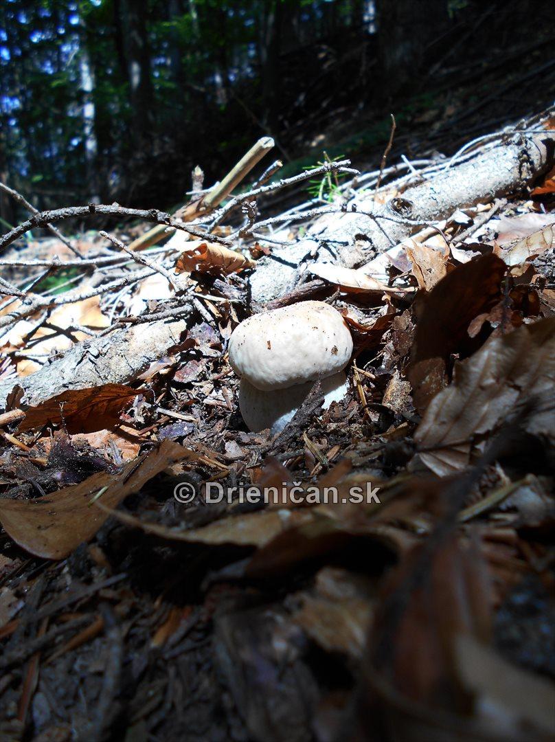 Hriby v nasich lesoch_04