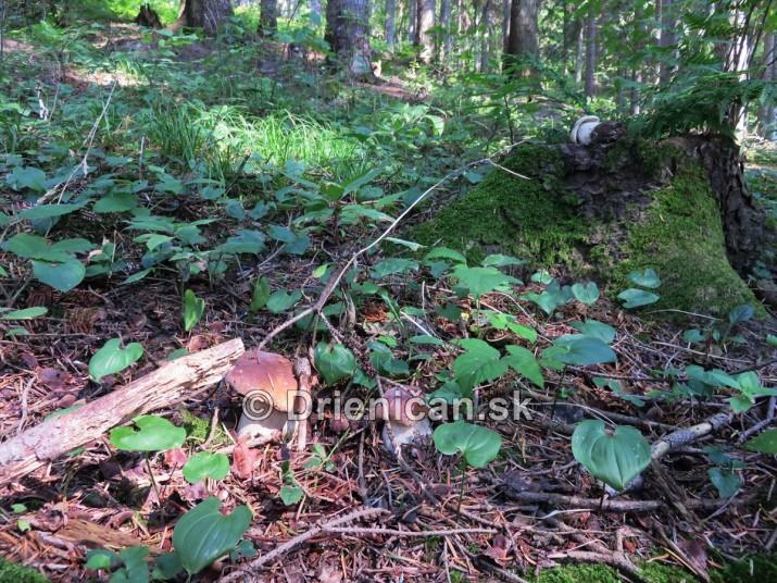 Hriby v nasich lesoch_29