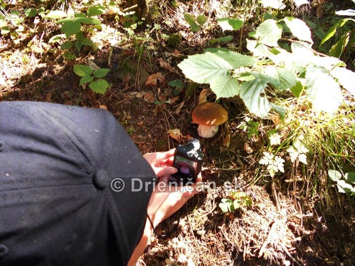 Hriby v nasich lesoch_37