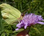 Kŕmime my motýle