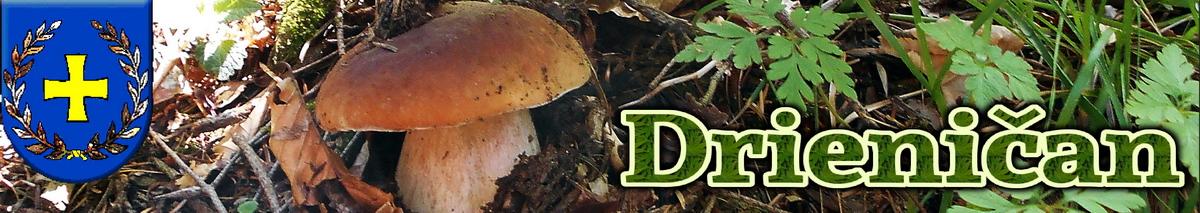 Logo č.58 , Krásny hríb v hlbokom lese...