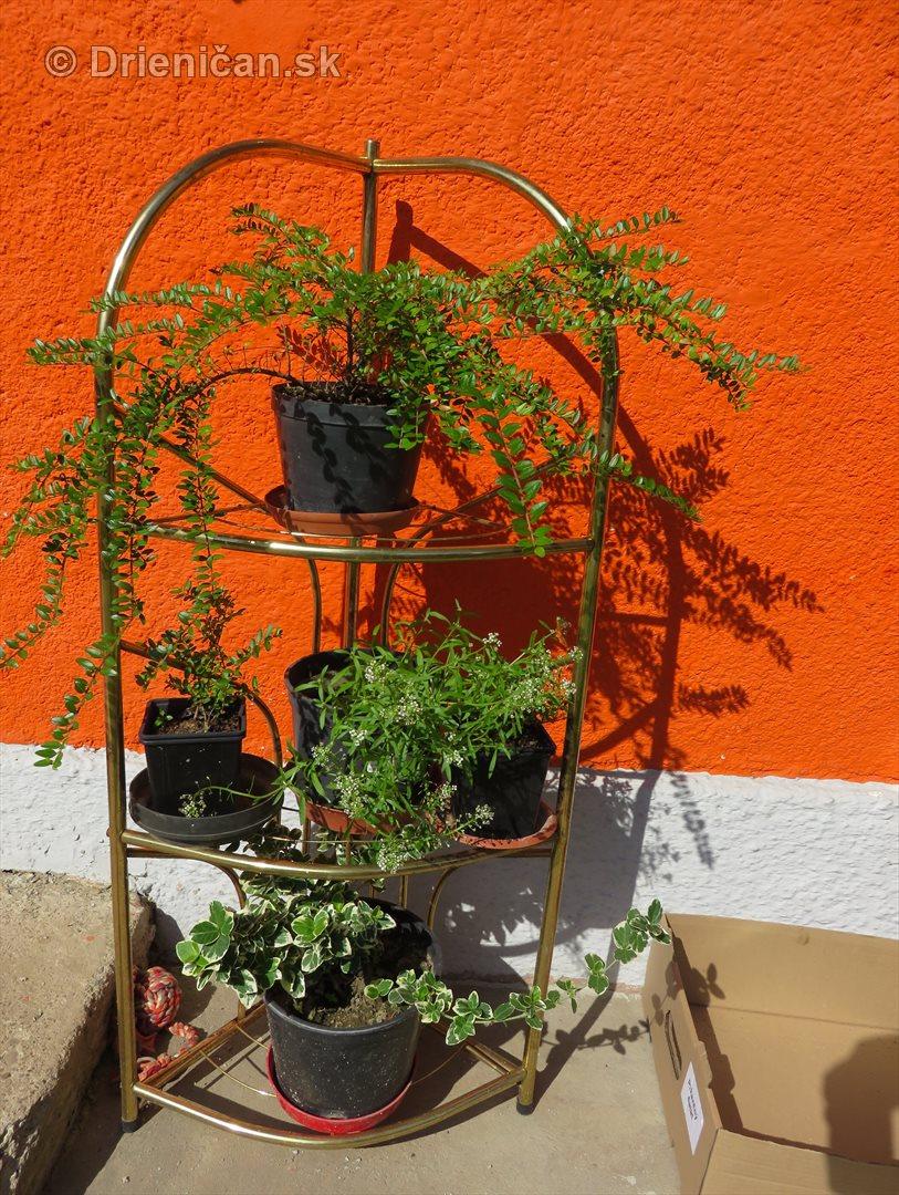 Nahliadnutie do jednej zahradky_23