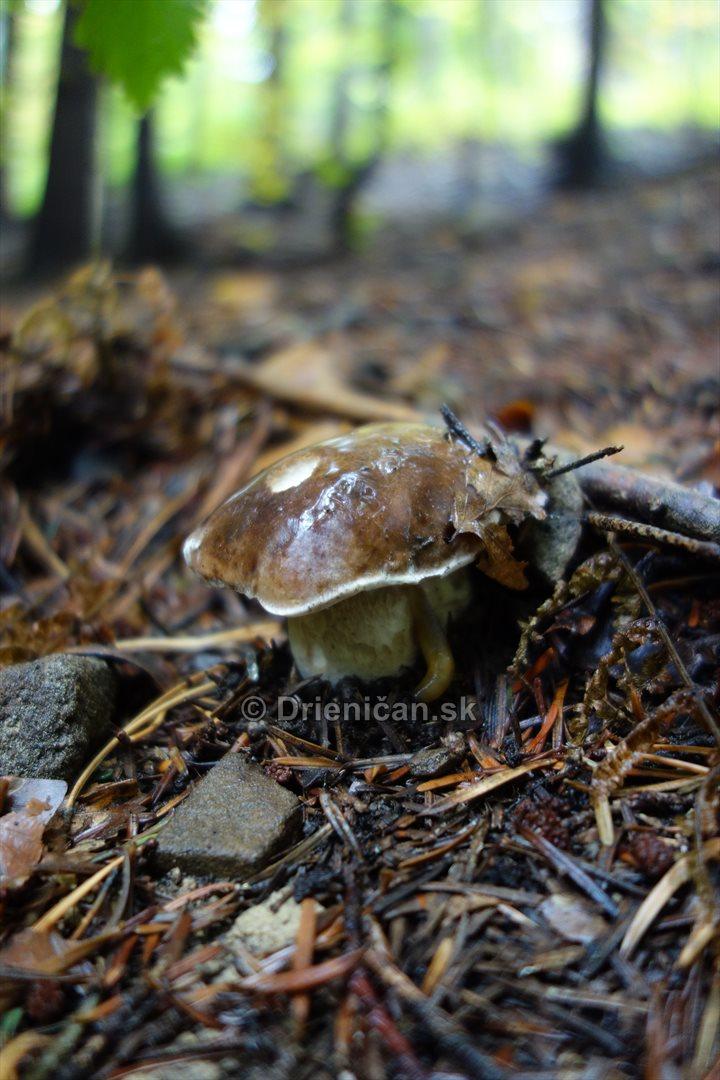 Neskore jesenne hriby_03