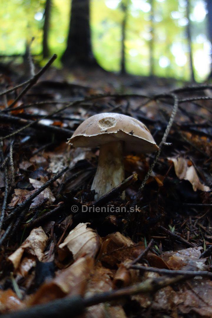 Neskore jesenne hriby_07