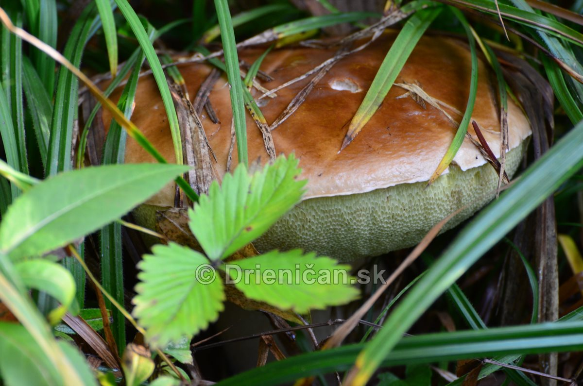 Neskore jesenne hriby_08