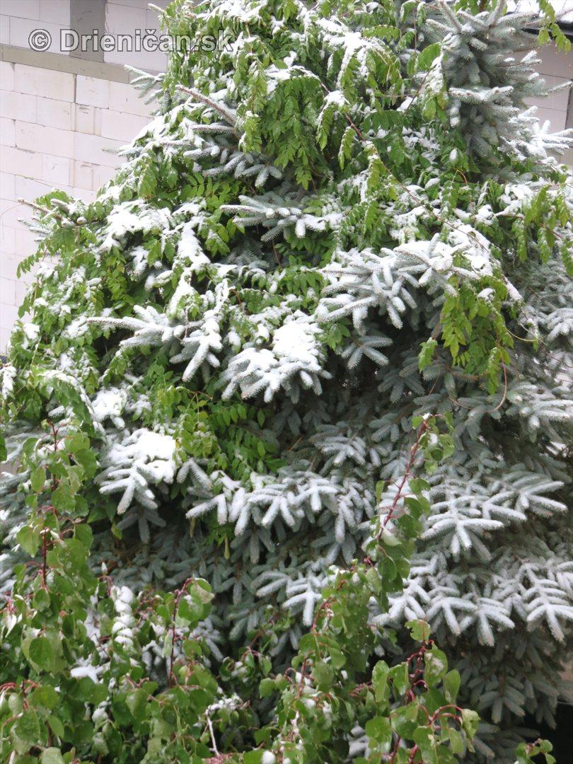 Prvy sneh_02